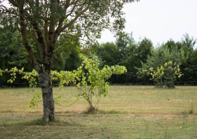 lecharhido garden-15