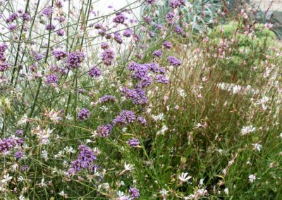 lecharhido garden-28