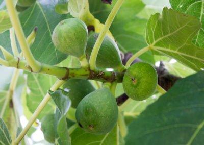 lecharhido garden-6
